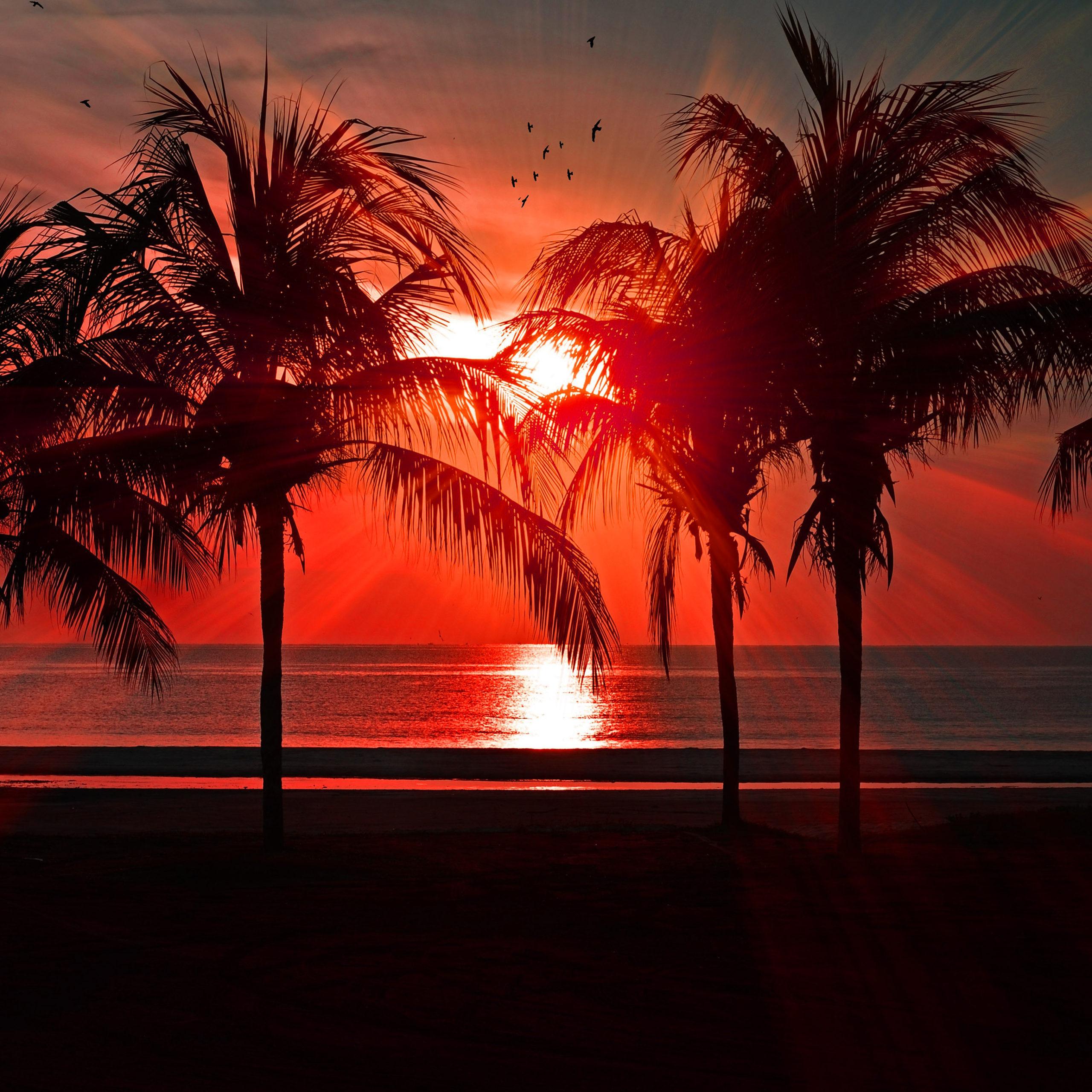 summer wallpaper iphone sunset palm trees